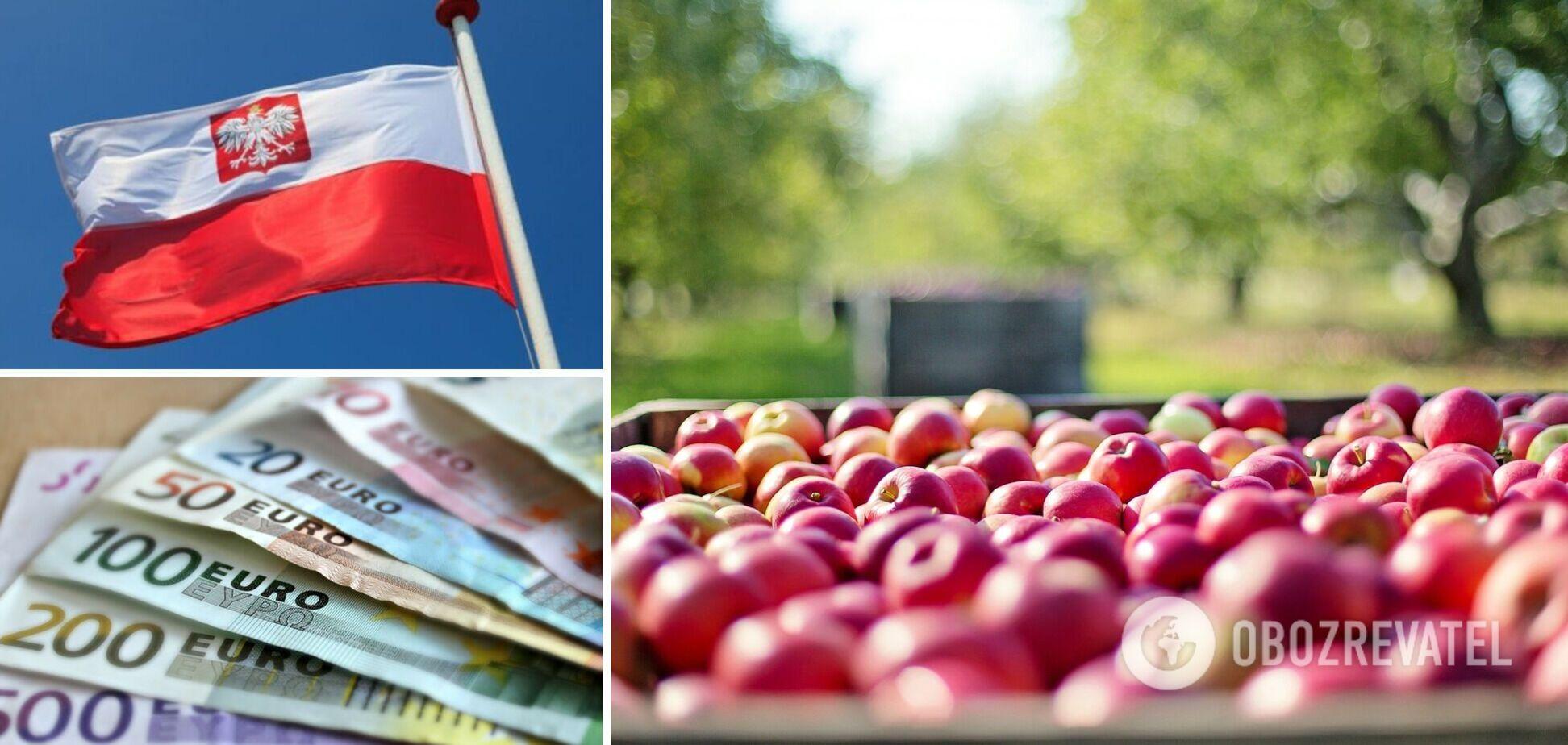 Збір яблук в Польщі опинився під загрозою через дефіцит заробітчан